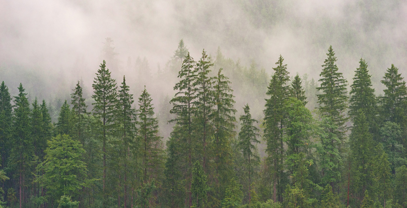 ETS rule change could boost forest planting