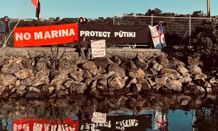 Korora keep fight going in Waiheke bay