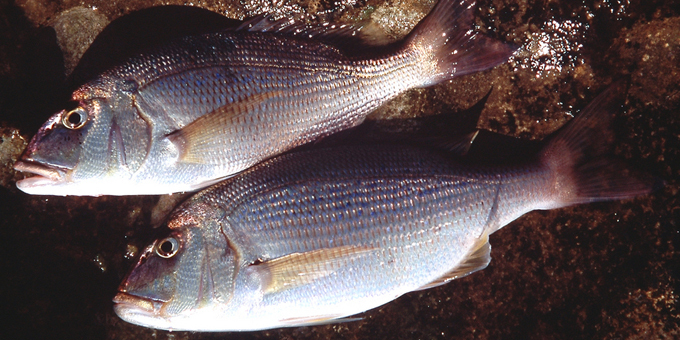 Rahui extended to give fish more recovery time