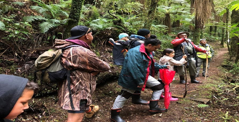 COVID funding for Raukūmara forest recovery