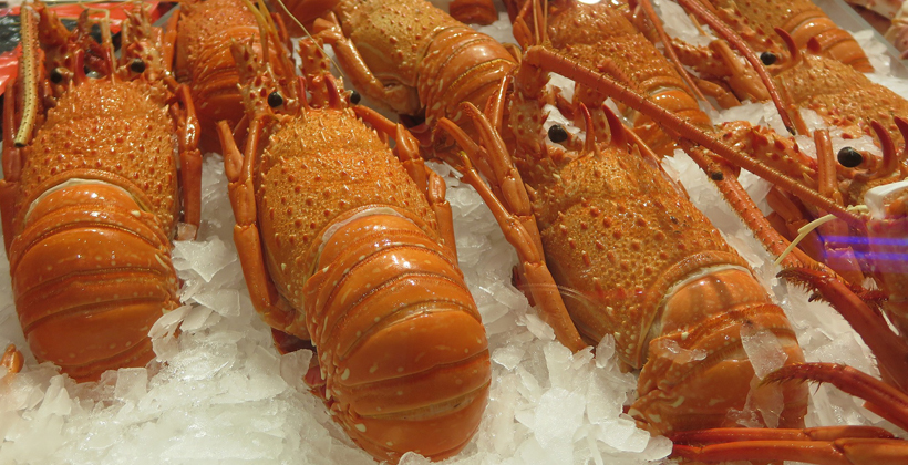 Iwi Collective counts cost of coronavirus on lobster trade