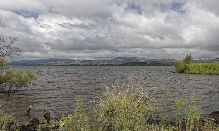 Rotorua sewage plan sparks petition