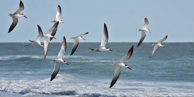 New plan to avoid bird deaths