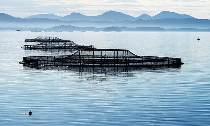 Rich taste of salmon on Sealord balance sheet