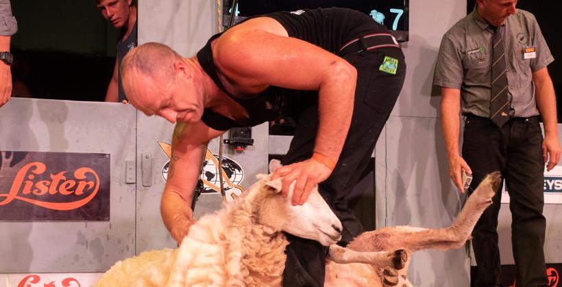 Shearing comps cut short