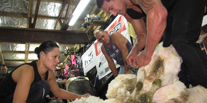 Shearing record tackled today