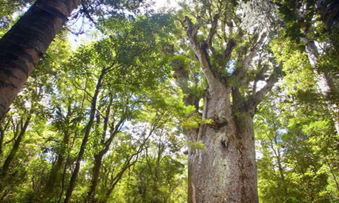 Iwi teaches rangatahi to be kaitiaki of forest