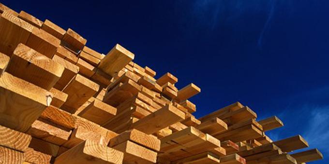 Taniwha-dragon timber plan dreaming
