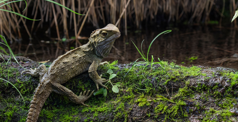 Baby tuatara spotted in sanctuary