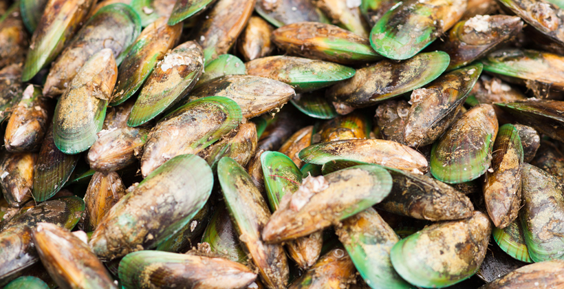 Uncooked mussels causing gut ache