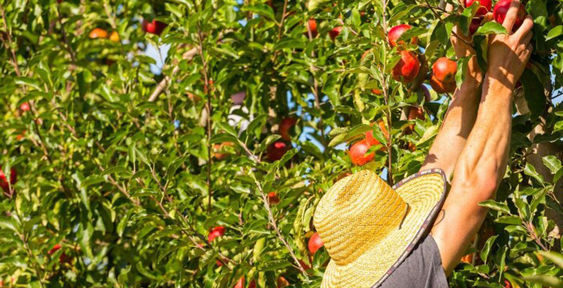 Wakatu Harvest shows Maori land potential