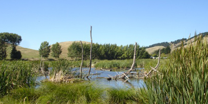 Mana o Te Wai funds to clean up far north lakes