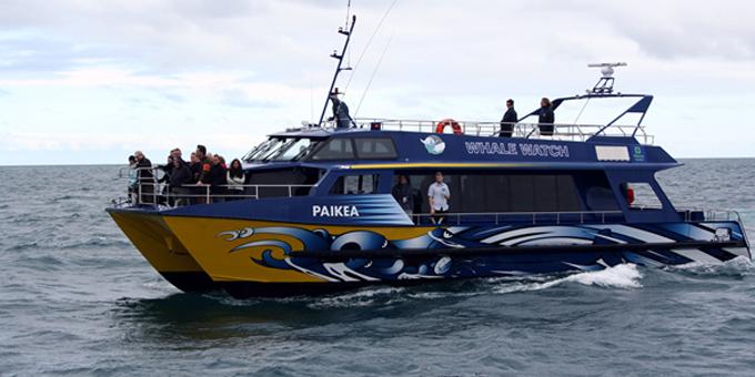 Whale kaitiaki up for tourism award