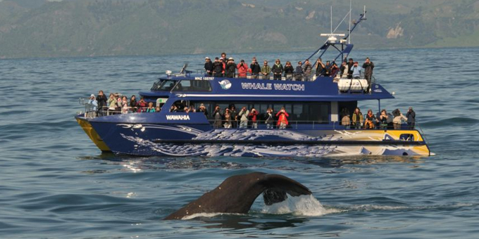 Marine reserve protects whale heritage