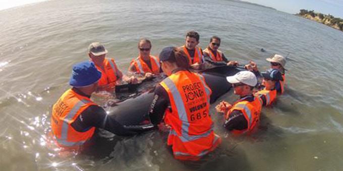 Iwi key in demanding whale autopsies